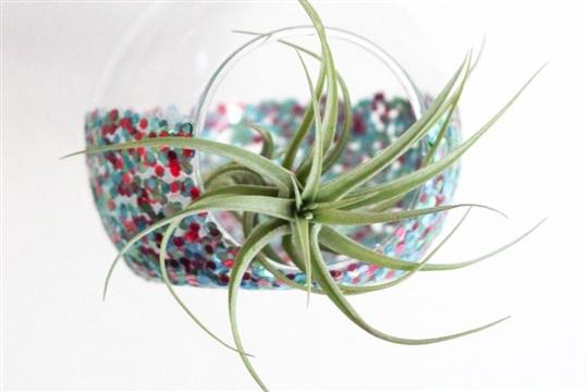 Glitter Dipped Air Plant Holder